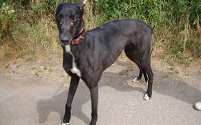 Bonnie (RESERVED)