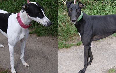 Howard & Jewel (RESERVED)